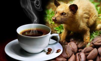 kofe4