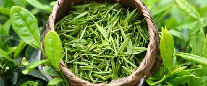 zelenyj-chaj-2